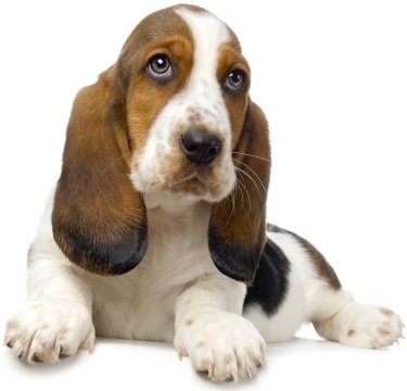 bet hound