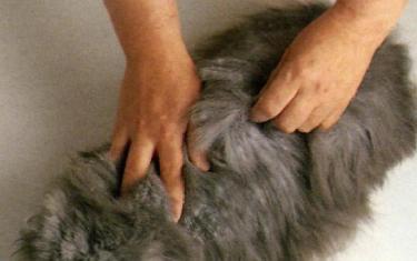 Spazzolatura Del Gatto A Pelo Lungo