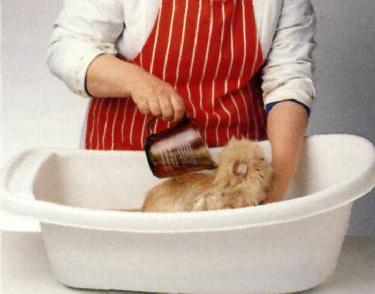 Il bagno - Fare il bagno al gatto ...