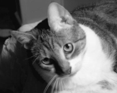 Malattie infettive dei gatti - Che malattie portano i gatti ...